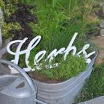 Visit our gardens...perennial herbs, miniature plants and flowers to enjoy.