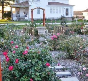 The rose test garden